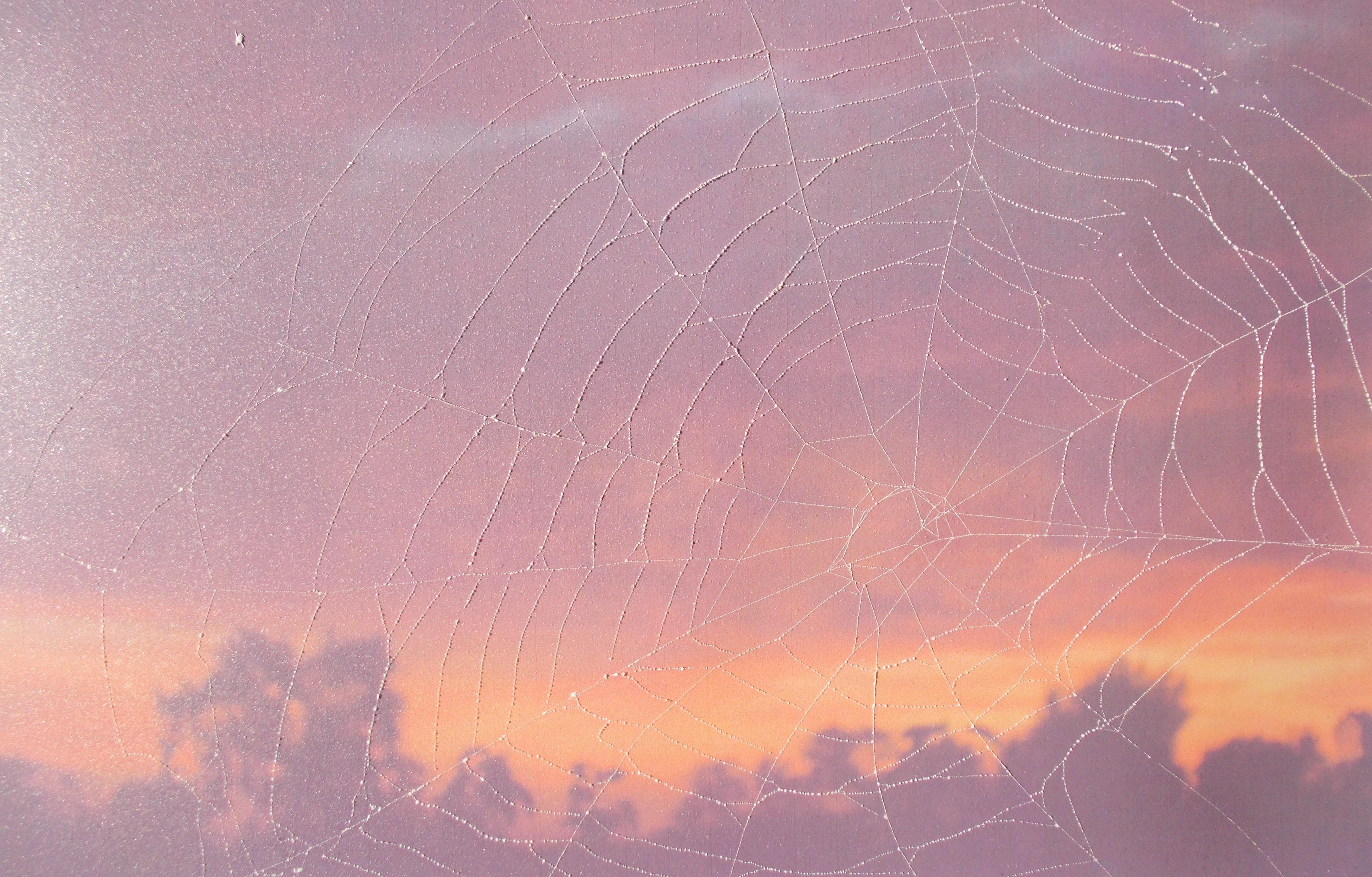 Sonnenuntergang (Foto mit echtem Netz) 30*40