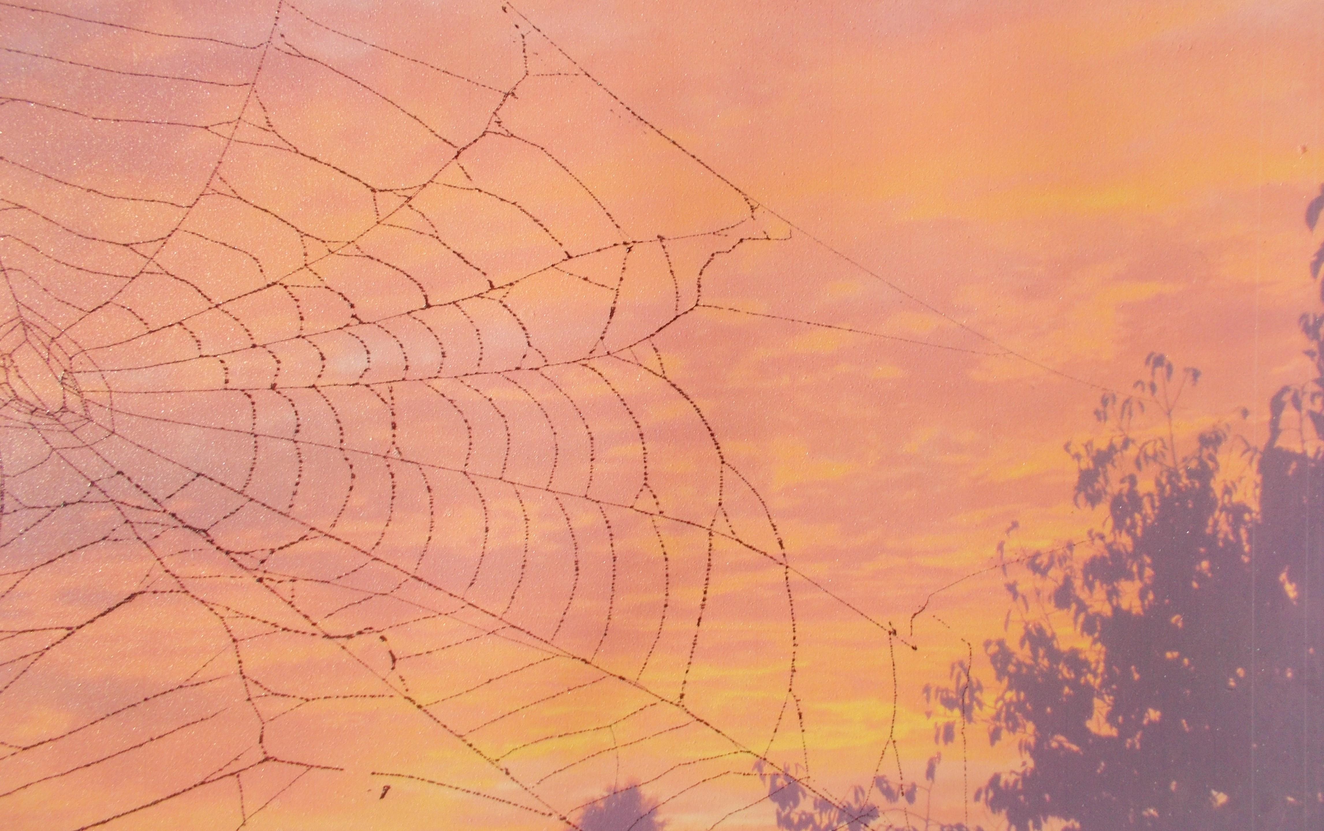 Sonnenuntergang 2 (Foto mit echtem Netz) 30*40