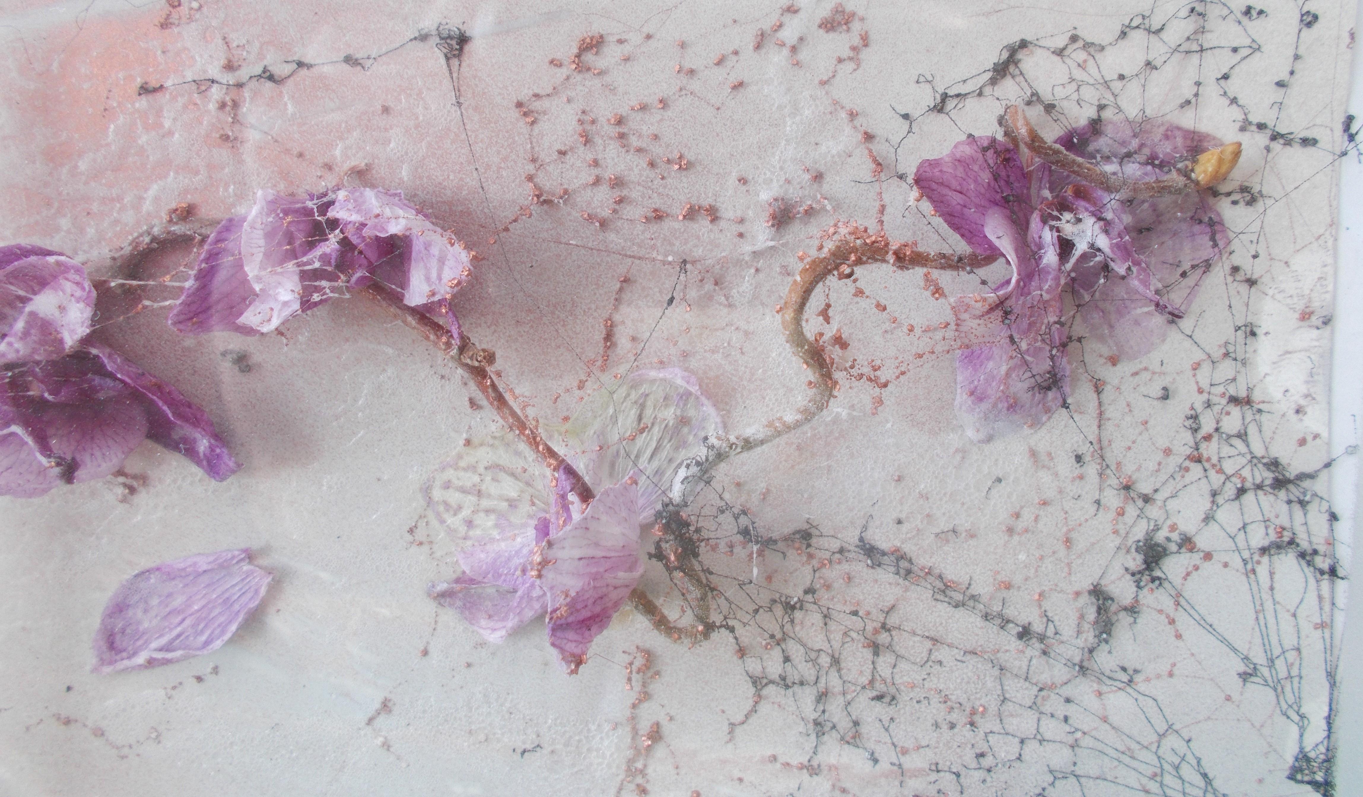 Nahaufnahme Zarte Orchideen