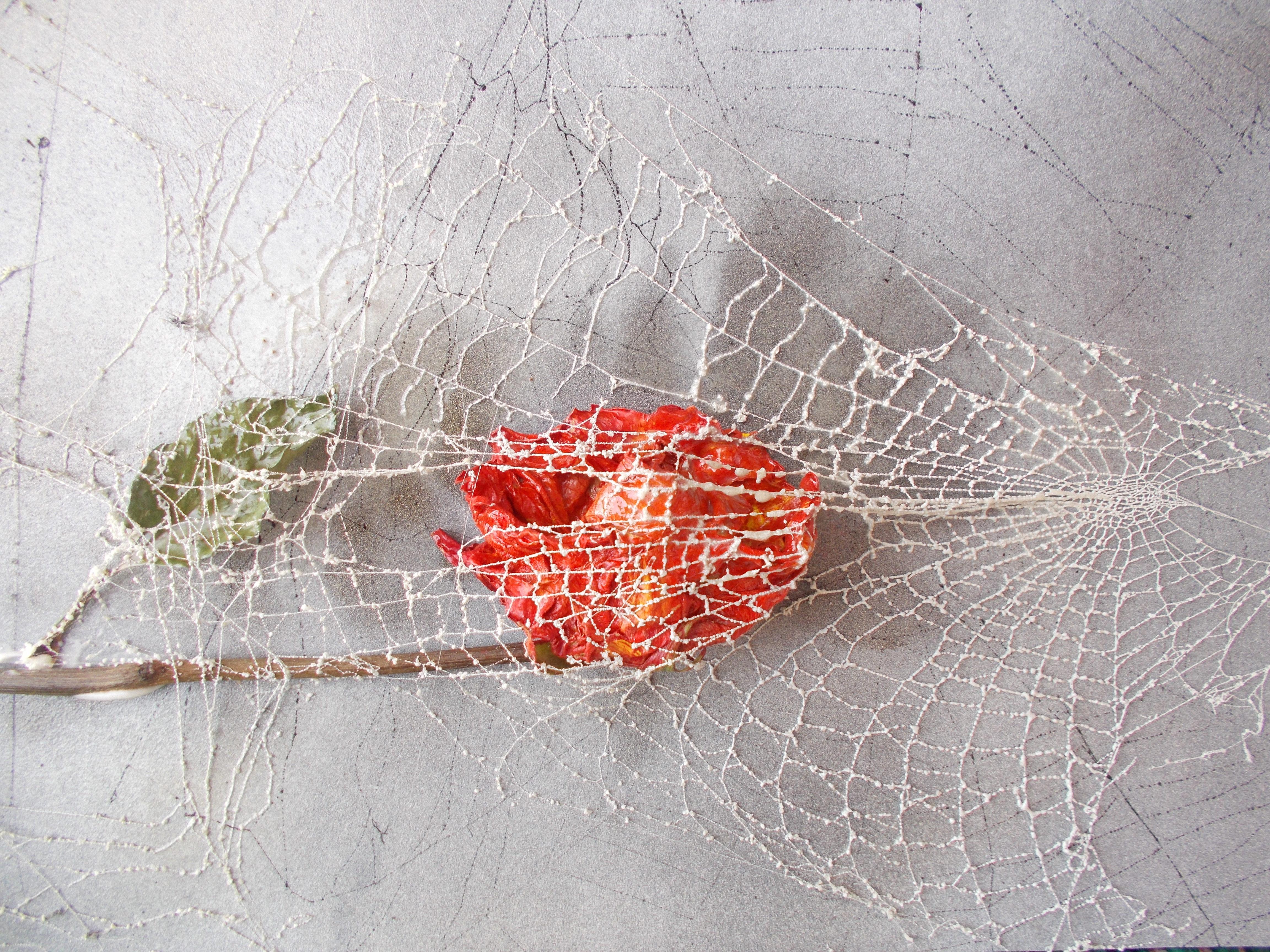 vernetzte Rose Ausschnitt
