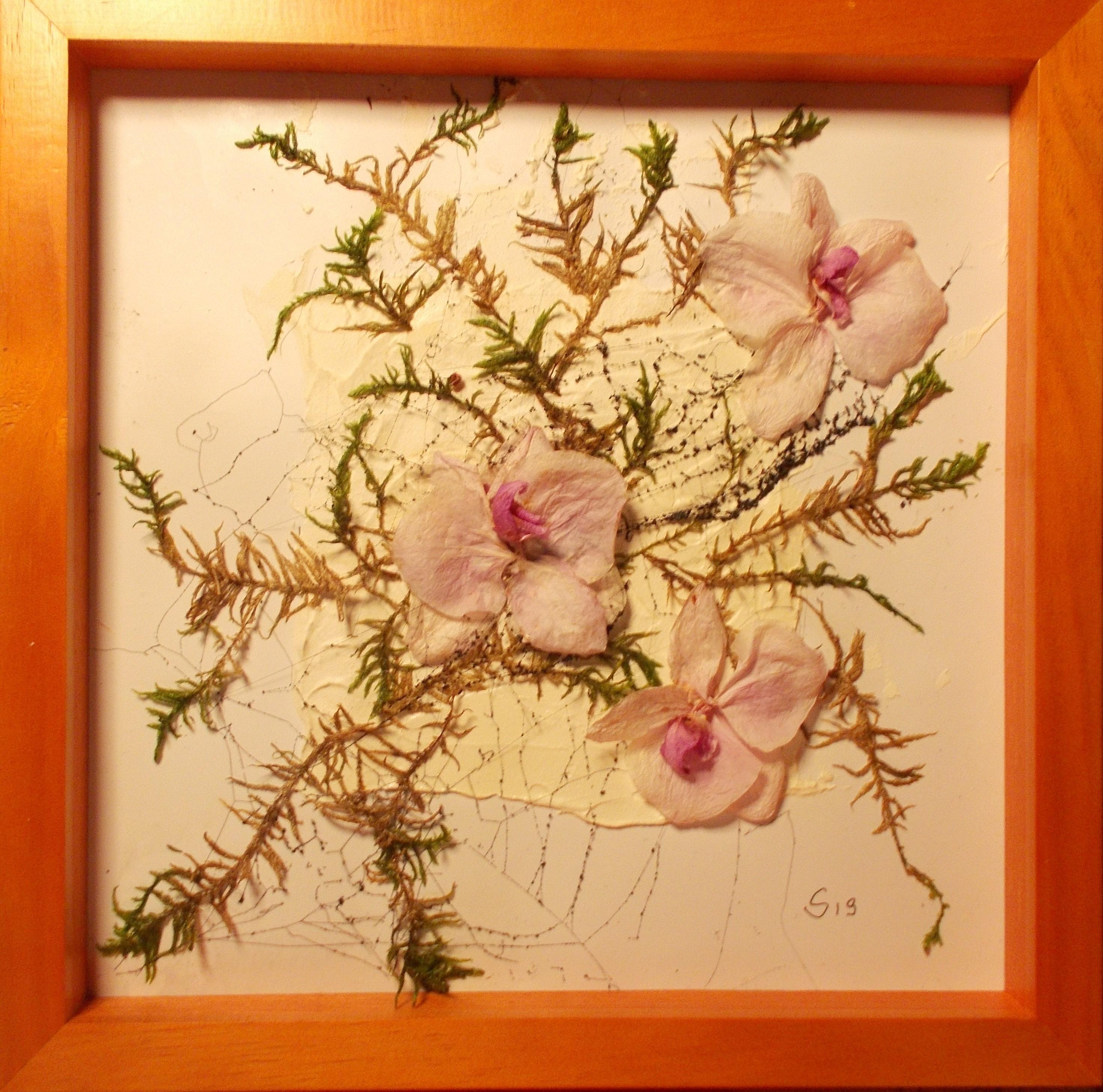 Orchideen, Moos auf Strukturpaste 23*23