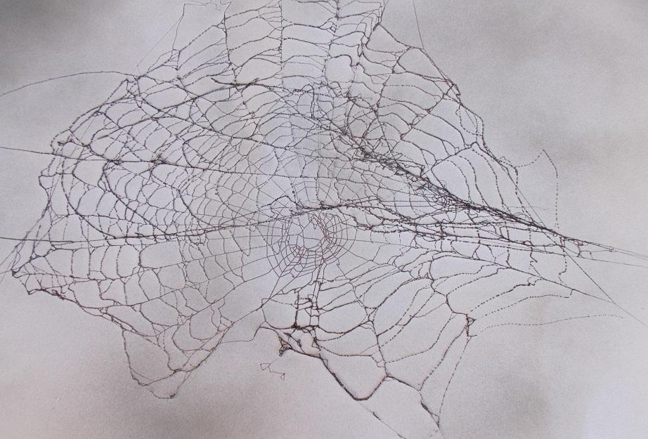 Spinnenetz im Herbst 2