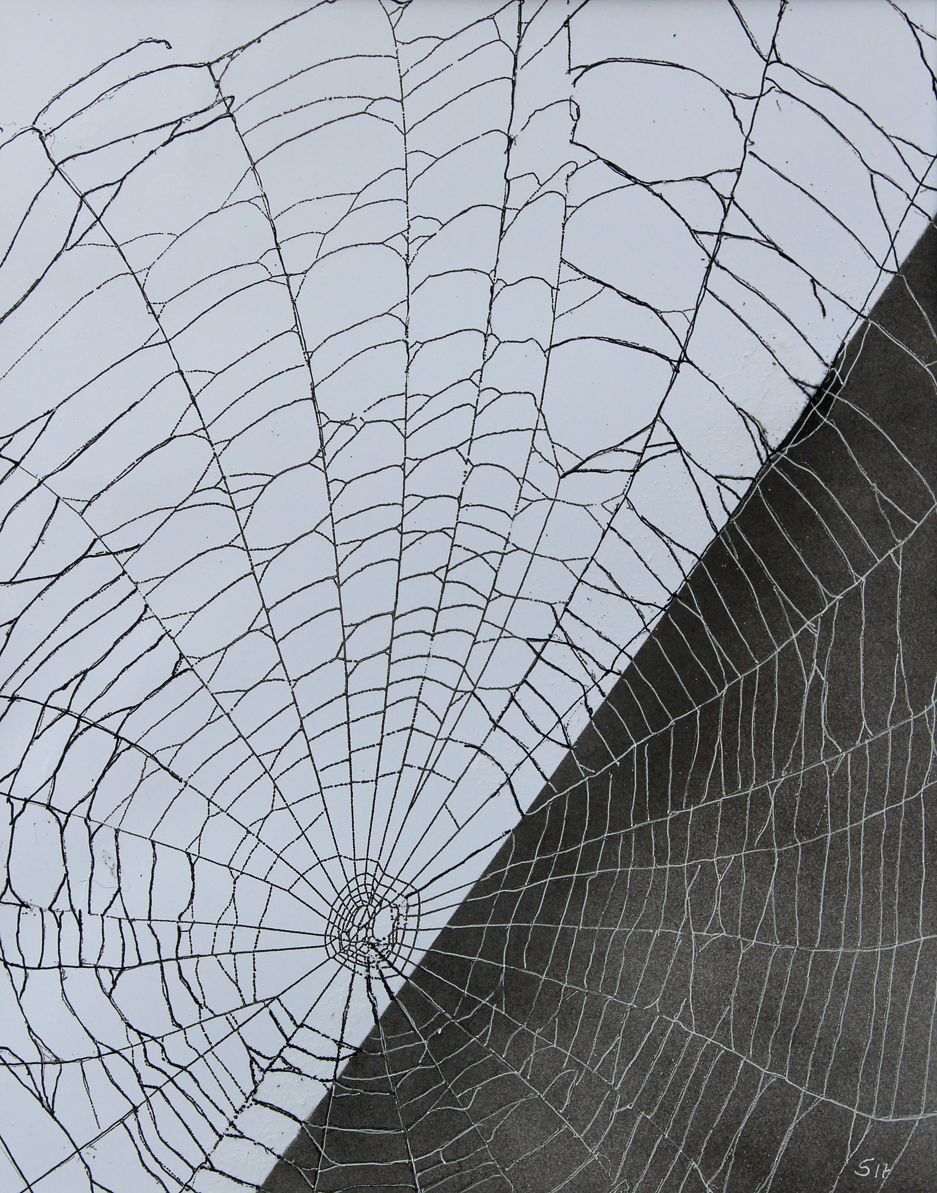echtes Spinnennetz